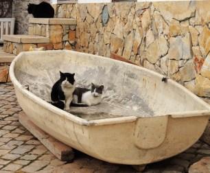 Feline friends in a boat!