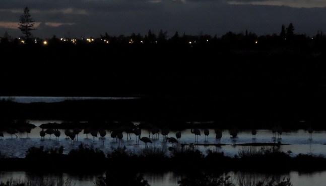 Flamingo shadows!