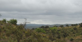 Windfarms in the distance