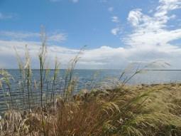 Portuguese wetlands