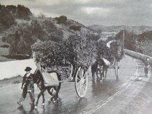 Illustration of moving fuel wagons taken from Dan Stanislawski's 'Portugal's Other Kingdom - The Algarve'