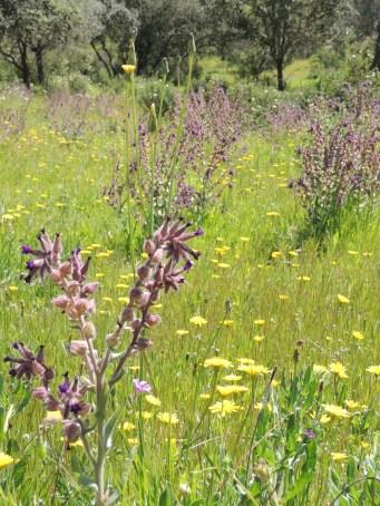 enchanted-meadows