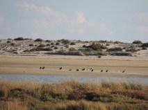 Cormorants on the beach