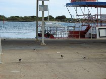Perhaps they are waiting to board the ferry