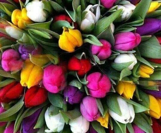 flori - La Mulți Ani de Ziua Femeii!