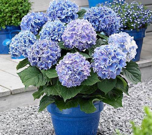 floriiile - La Mulți Ani tuturor celor cu nume de floare
