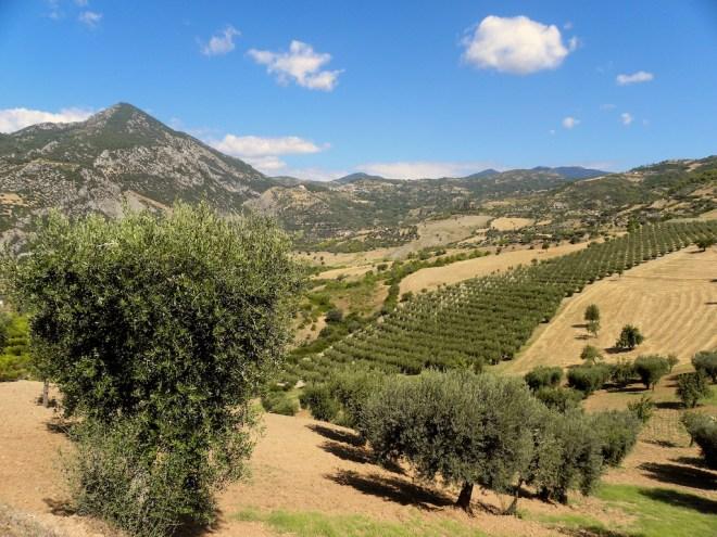Gli Oliveti - Azienda Agricola Arcaverde
