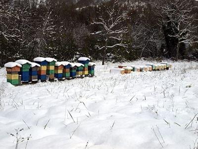 カプレーゼミケランジェロ村の養蜂箱