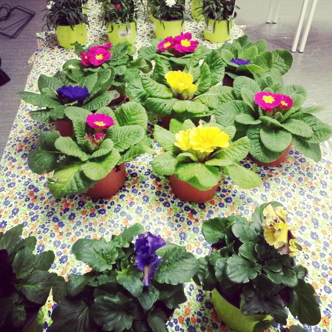J'ai fait du jardinage... (tout arrive !)