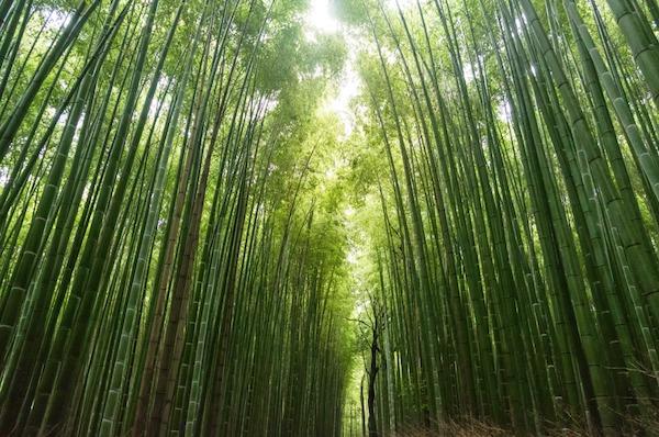 TOP 7 des meilleurs produits en bambou  pour la maison