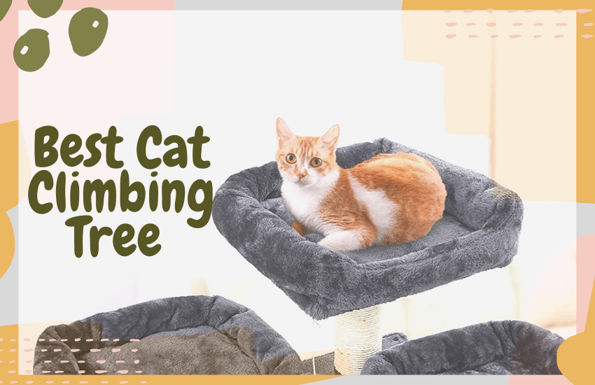 Choosing The Best Cat Climbing Tree With 2020 Picks Oliveknows