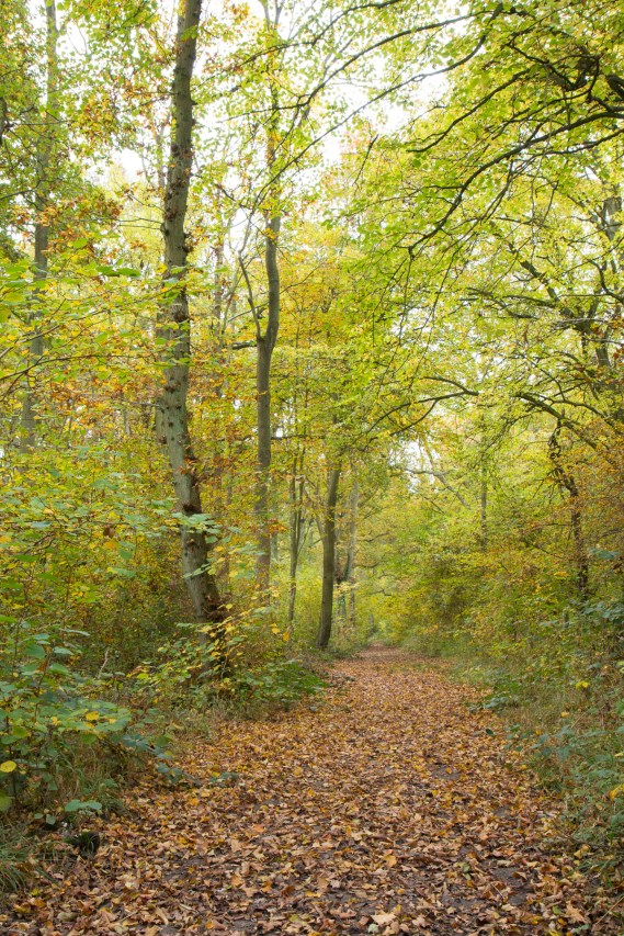 Another leafy path through the autumnal woodland. Photos from a trip to Wakerley Great Wood.