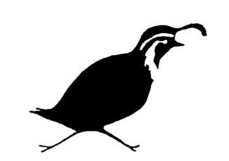 quail-21