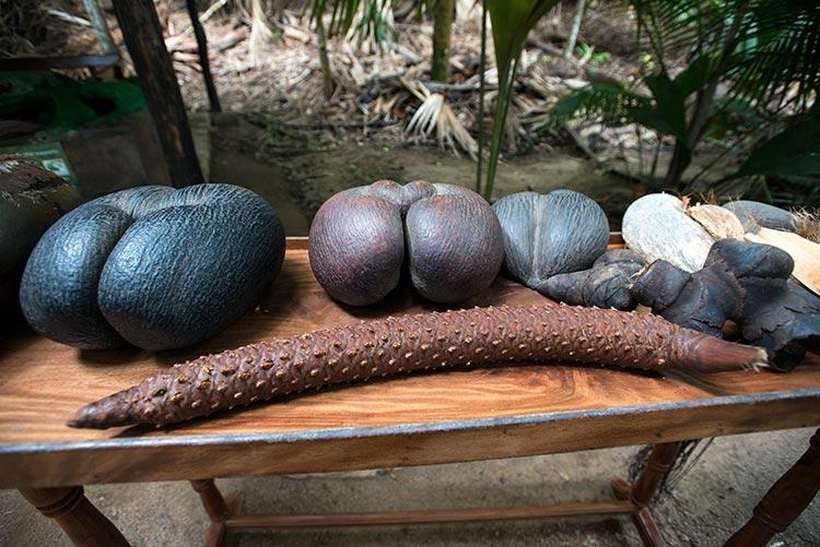 coco de mer praslin seychelles