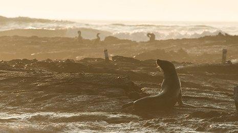 galapagos islands sunset seals cormorants