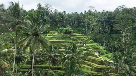 bali,ubud,rice terraces, oliver berry