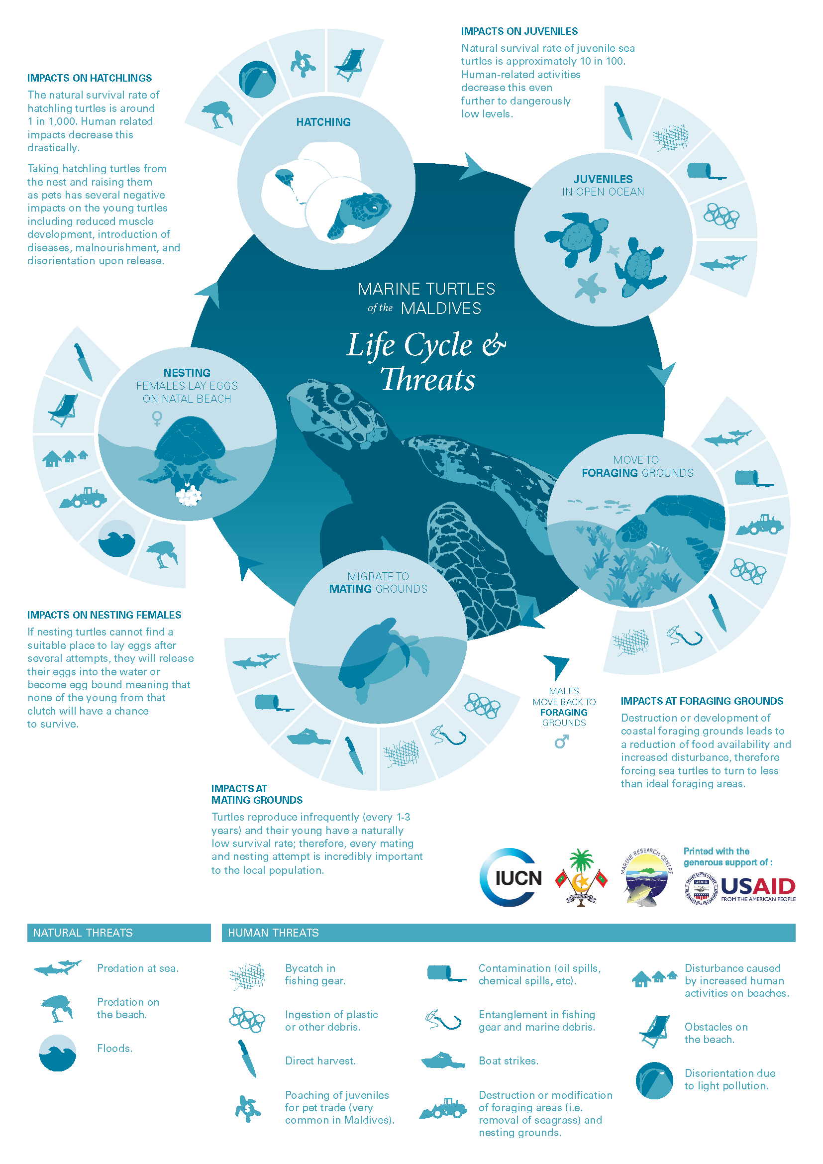 sea turtle life cycle diagram wiring for household electricity of turtles olive ridley project