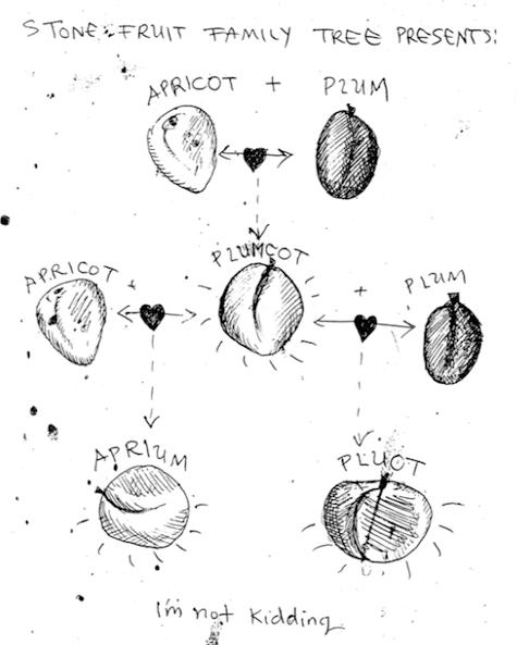 stone_fruit_family_tree