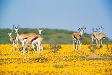 Wildlife at Bushmans Kloof Wilderness Reserve