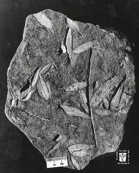 olive-origin-01s