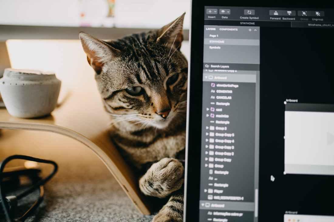 VS Code with cat