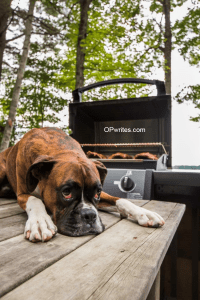 Funny pictures of boxer dogs