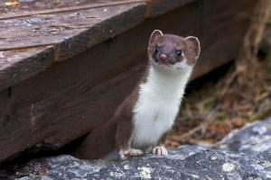 What are weasel words