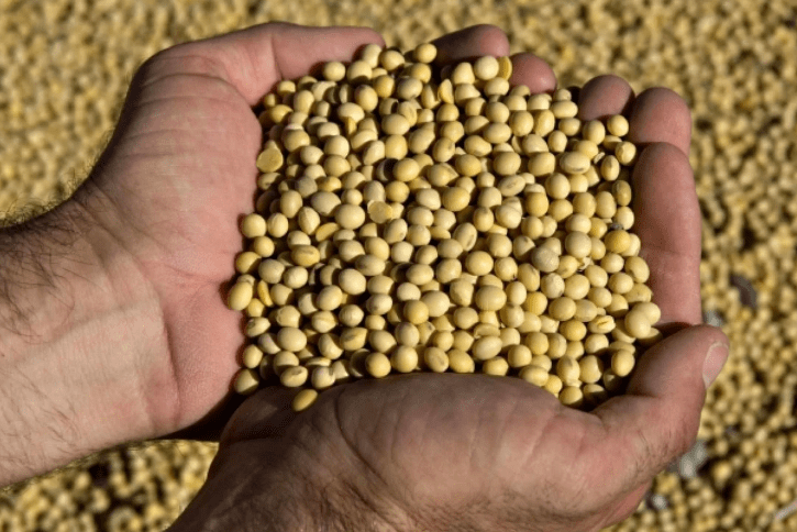 Soya bean imports revive fears in China about genetically modified food – South China Morning Post