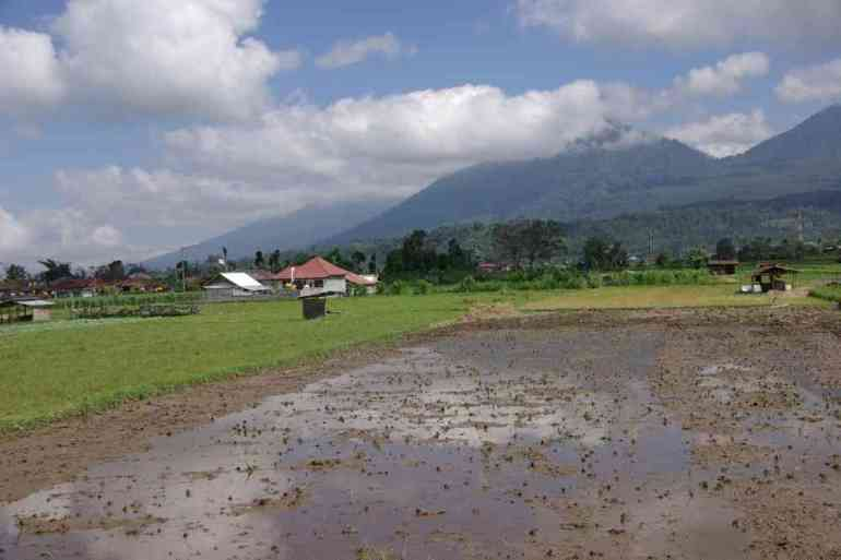 Marche le long d'une rizière, le 7 juillet 2007