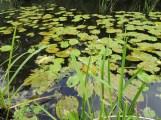 Het watertje waar het festivalterrein langs lag.