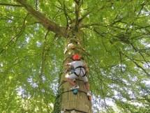 Hoog in de boom klimmen