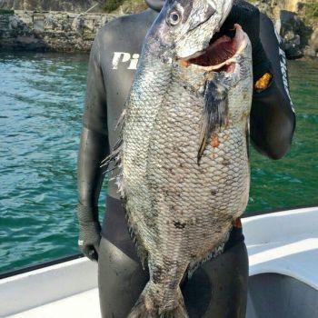 Xerardo Martínez  pesca un bicudo de 6,2 quilos
