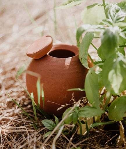 ollas-a-planter-brut-constant-couteille