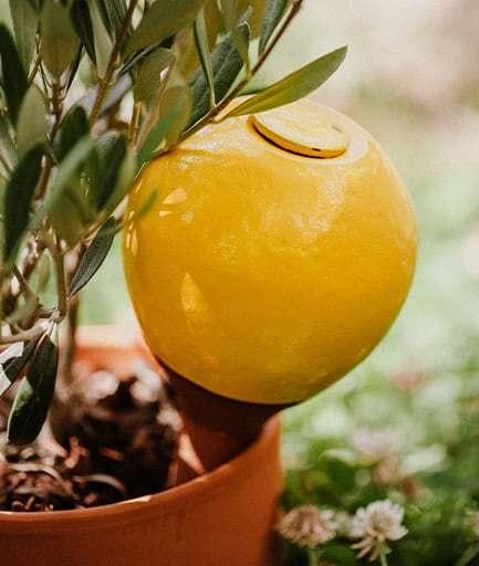 ollas-a-planter-medium-jaune-constant-couteille
