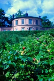 Rose hips at Rosendals Trädgård