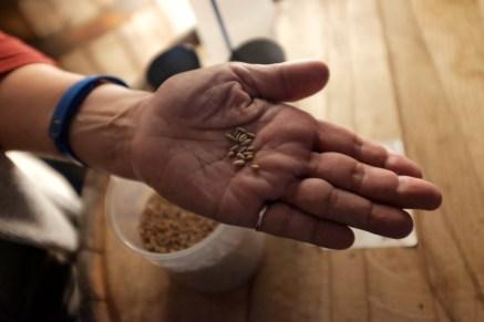 Illinois grain