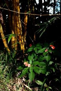 Hoolawa grove