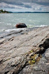 shoreline bloom