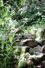 31 machu picchu hike staircase