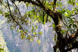 32 machu picchu hike trees
