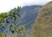 38 machu picchu tree