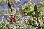 57 machu picchu plants