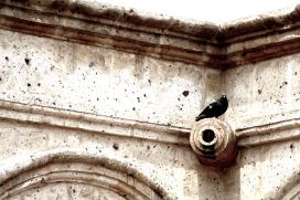 31 arequipa claustros pigeon