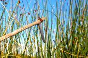 53 lake titicaca reed scythe