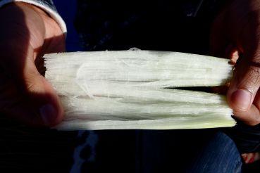 54 lake titicaca reed