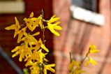 20 yellow flowers