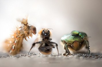 low_depth_of_field_insects