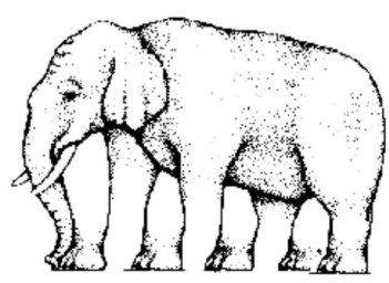 9_Ψευδαίσθηση_πόδια ελέφαντα