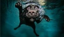 Σκυλάκια στα βαθιά – Οι απίστευτες φωτογραφίες του Σεθ Κάστελ
