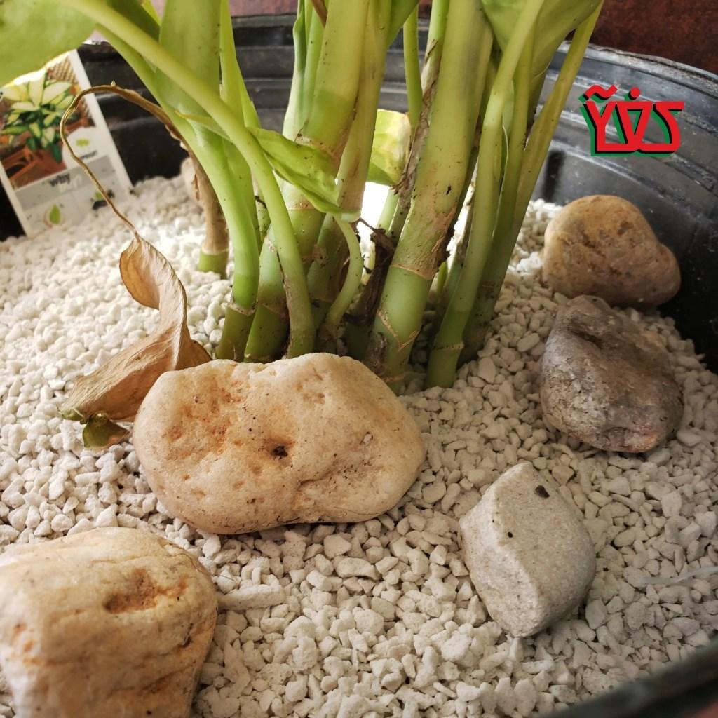 Jìgìjìgì EP004 – Fungus Gnats